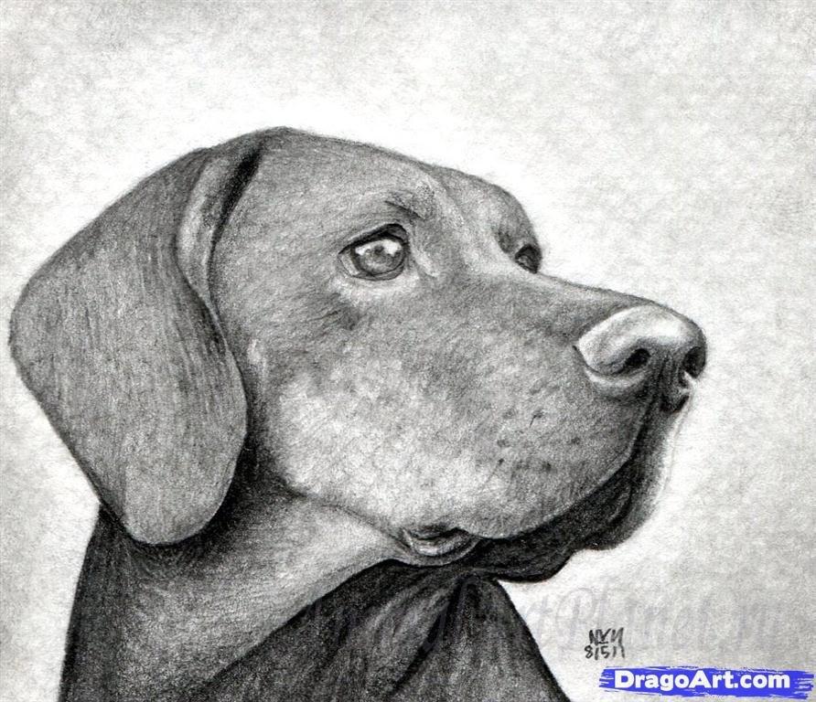 Рисунки животных рисовать собаку объем
