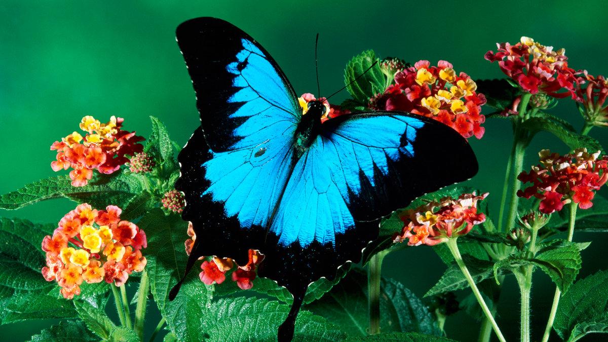 Бабочки открытки фото, открытка для