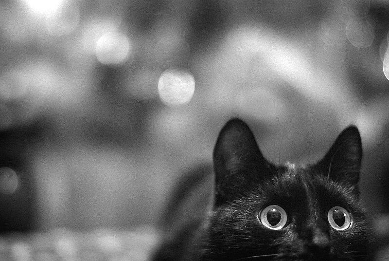 Картинки смешных котов черных, сентября