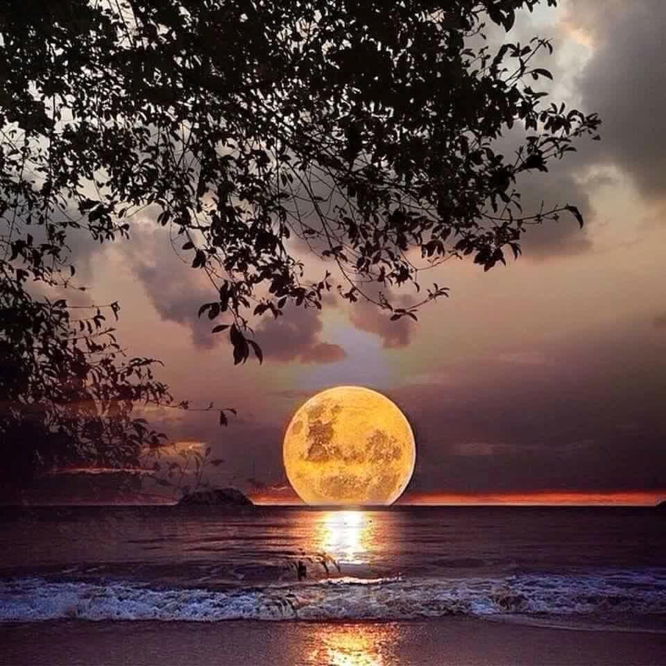 Поздравление новым, открытка лунная ночь