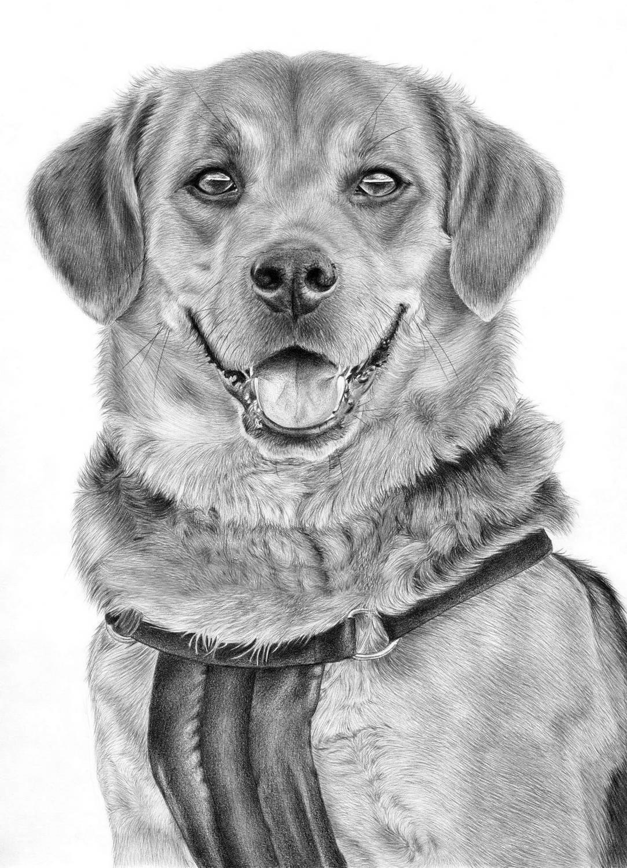 картинки рисования собак варенье обладает великолепным