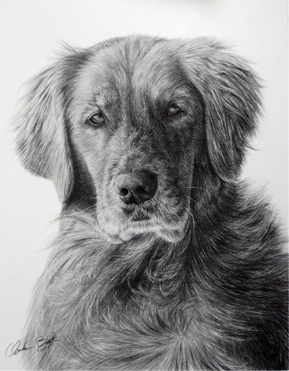 Нарисованные картинки собак карандашом, открытки днем