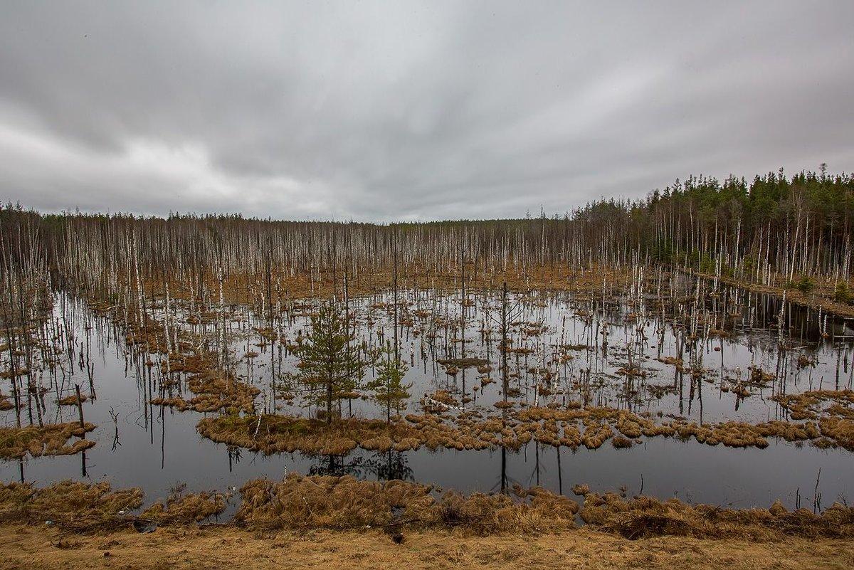 один важный фото болота чокморова сделать самодельный