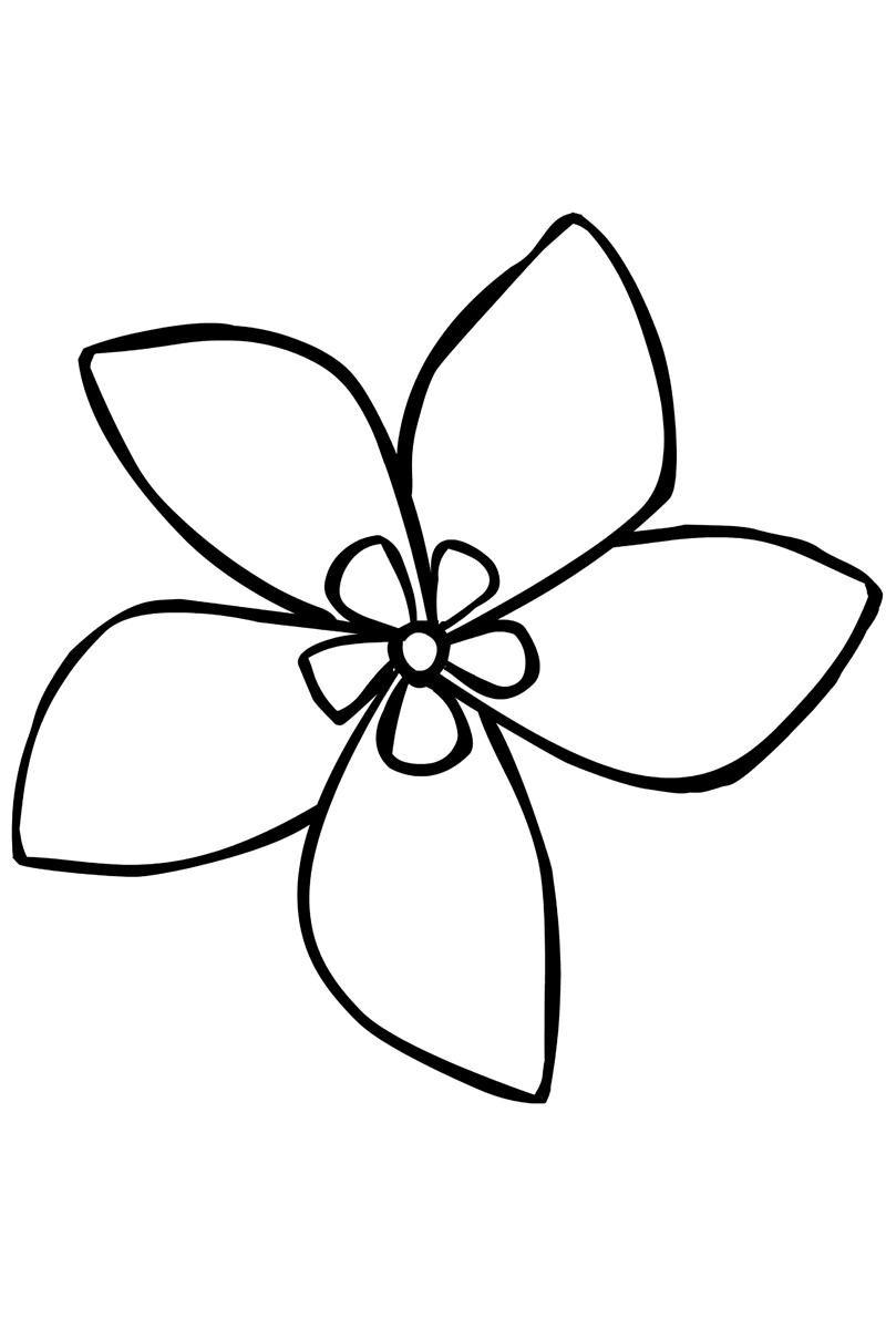легкие рисунки цветов