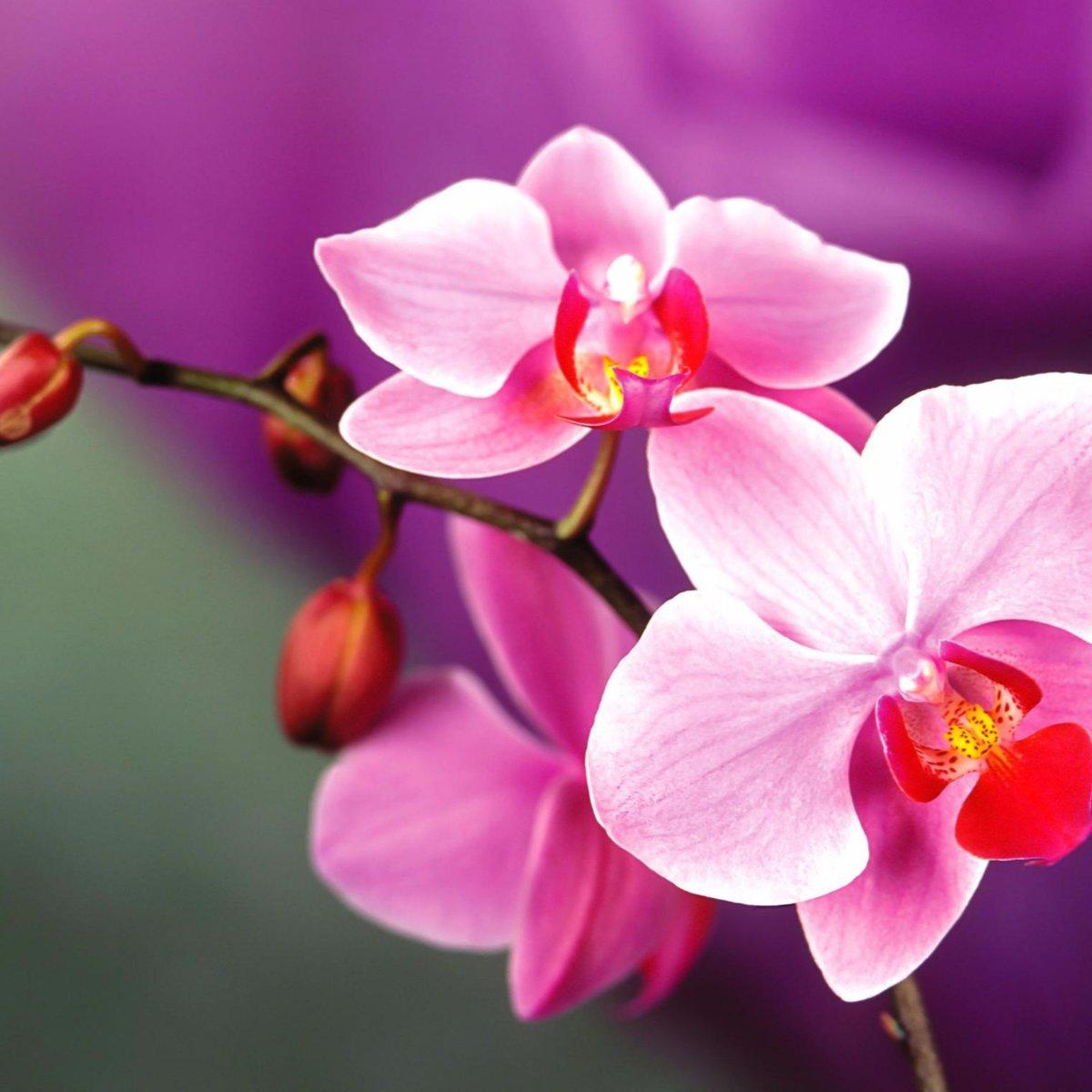 Картинки цветы орхидеи на рабочий стол