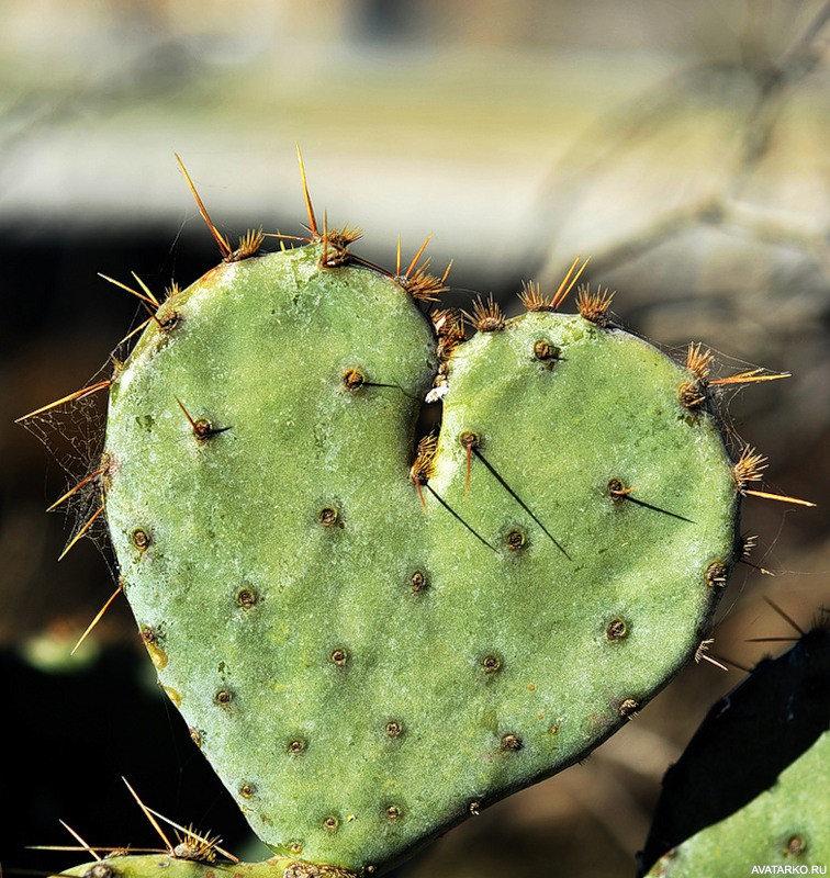 Смешная картинка кактуса, самый красивый парень
