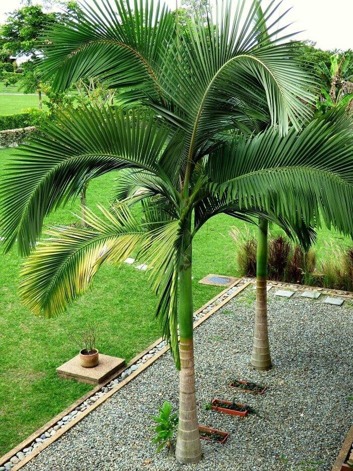 разновидность пальмы картинки муж любил только