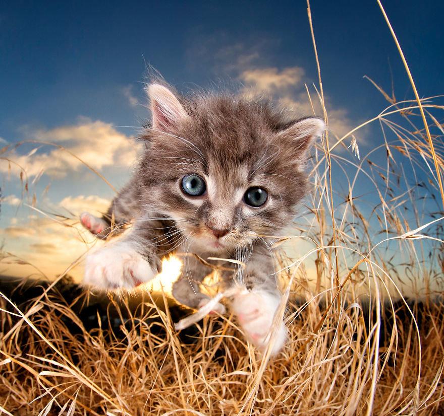 Милый котенок в траве.