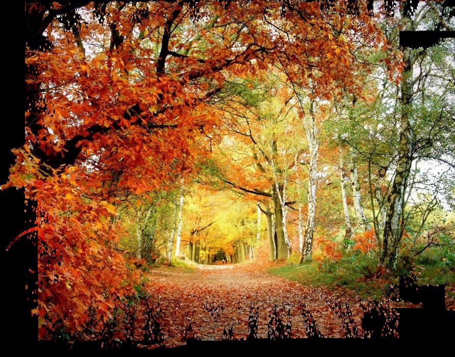 Картинки пнг осень