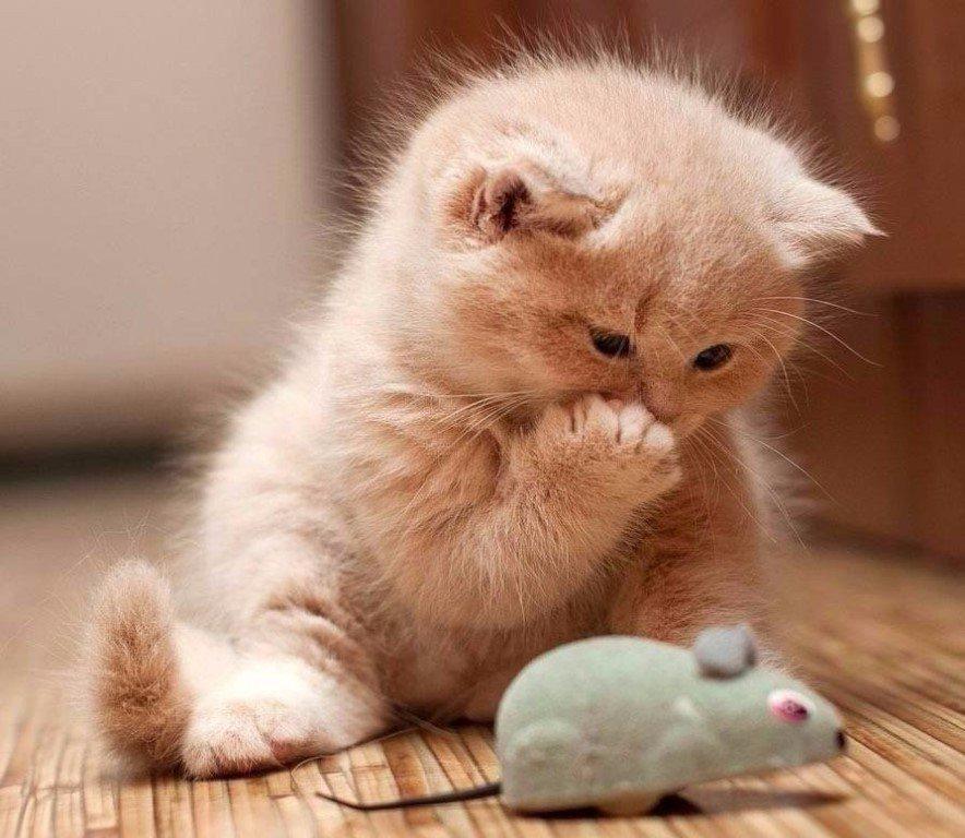 Картинки котенка приколы