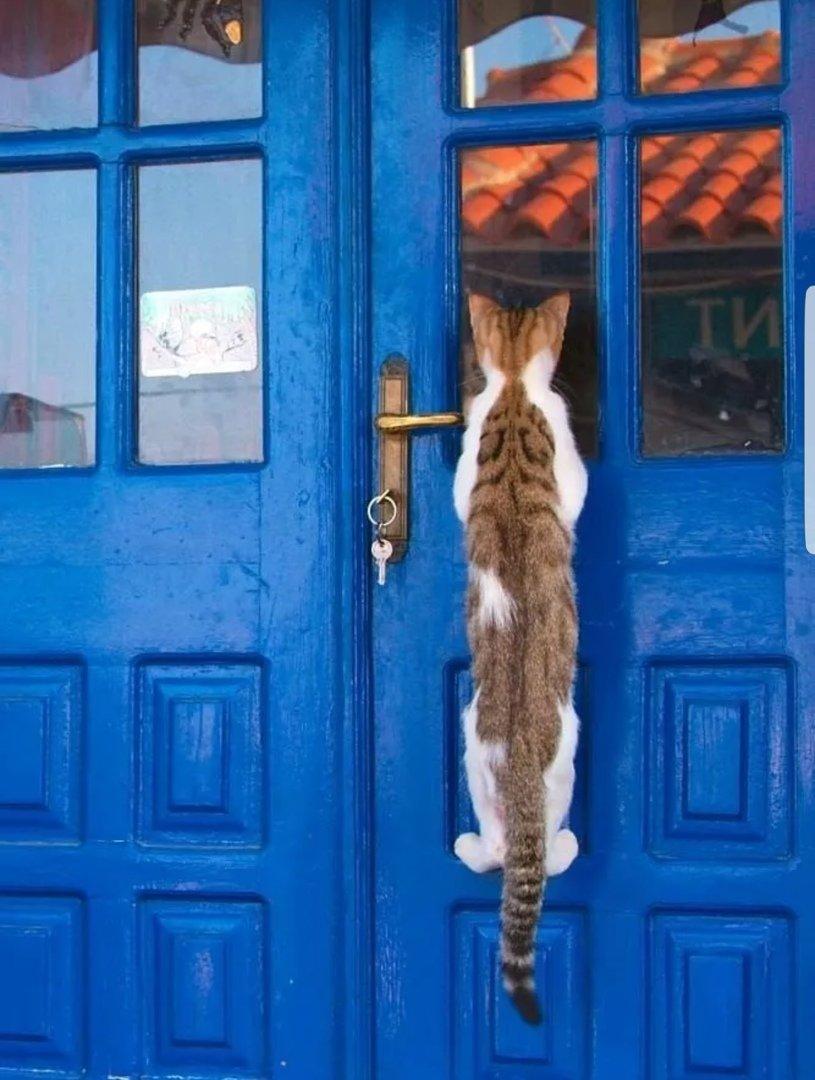 День заглядывания в окна открытки, открытка именем
