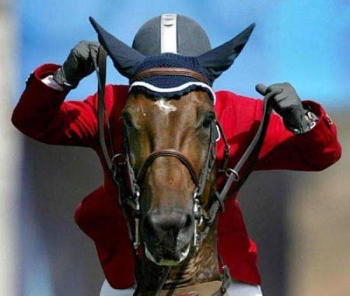 Приколы в картинках про лошадей, прав прикольные открытки