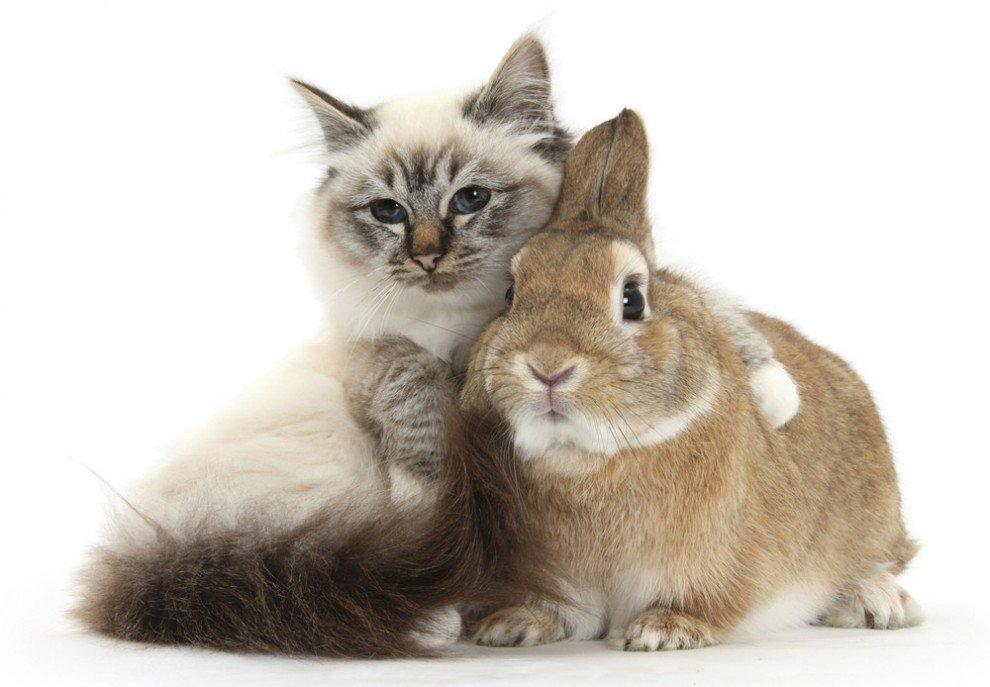 Приветствия, открытка котом кроликом