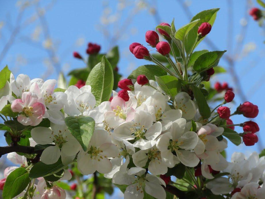Открытки с яблоневым садом, красивые