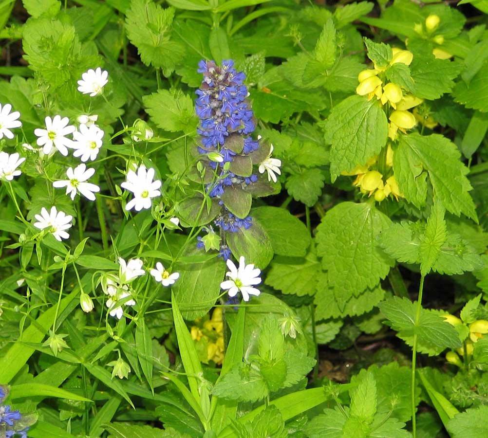 Полевые цветы подмосковья фото и названия