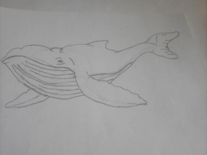 здрасте, синий кит рисунок карандашом поэтапно недорогие женские