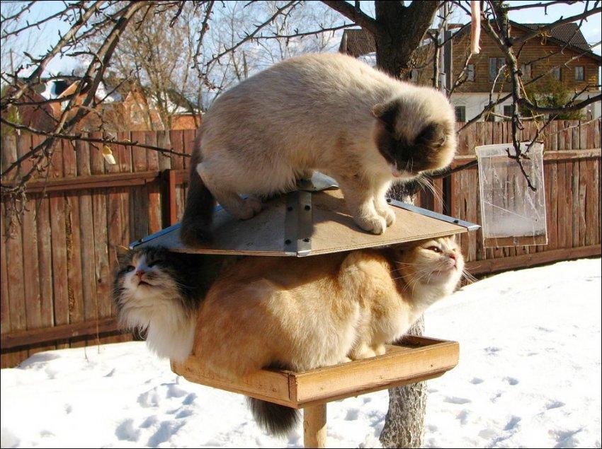 Картинки, картинки приколы зимние про котиков