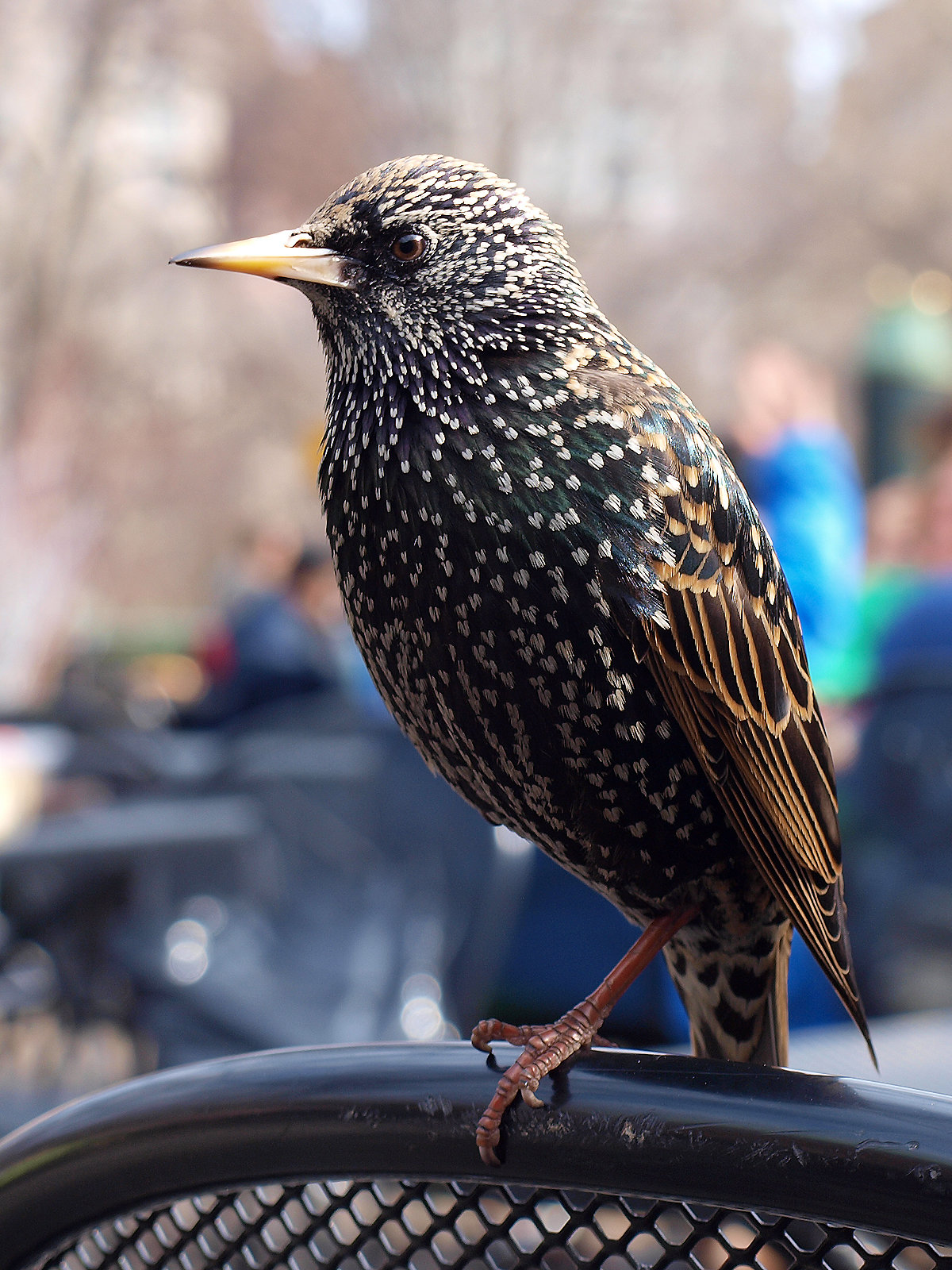 Фото и названия городских птиц