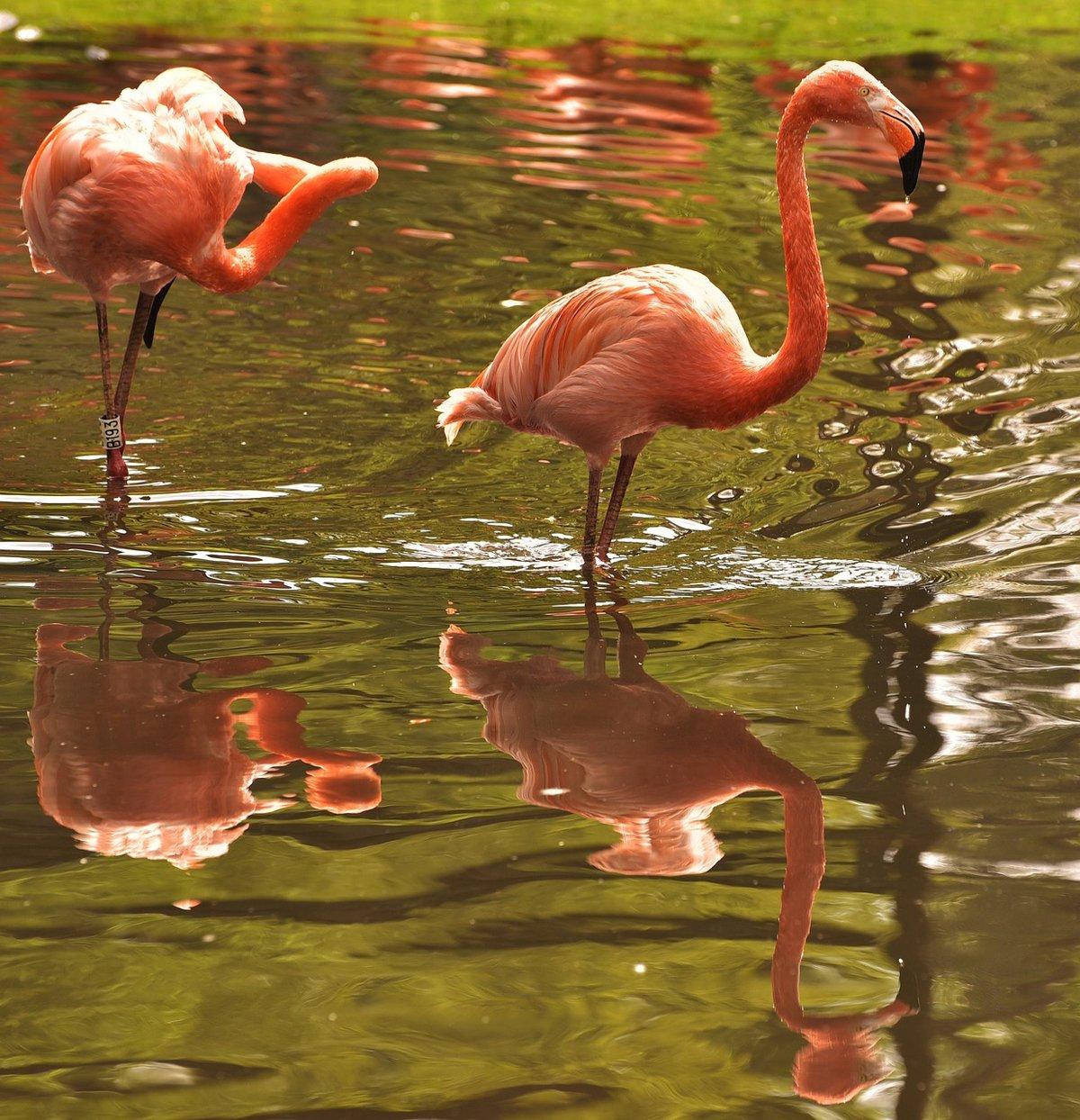 фламинго картинки и человек славится только