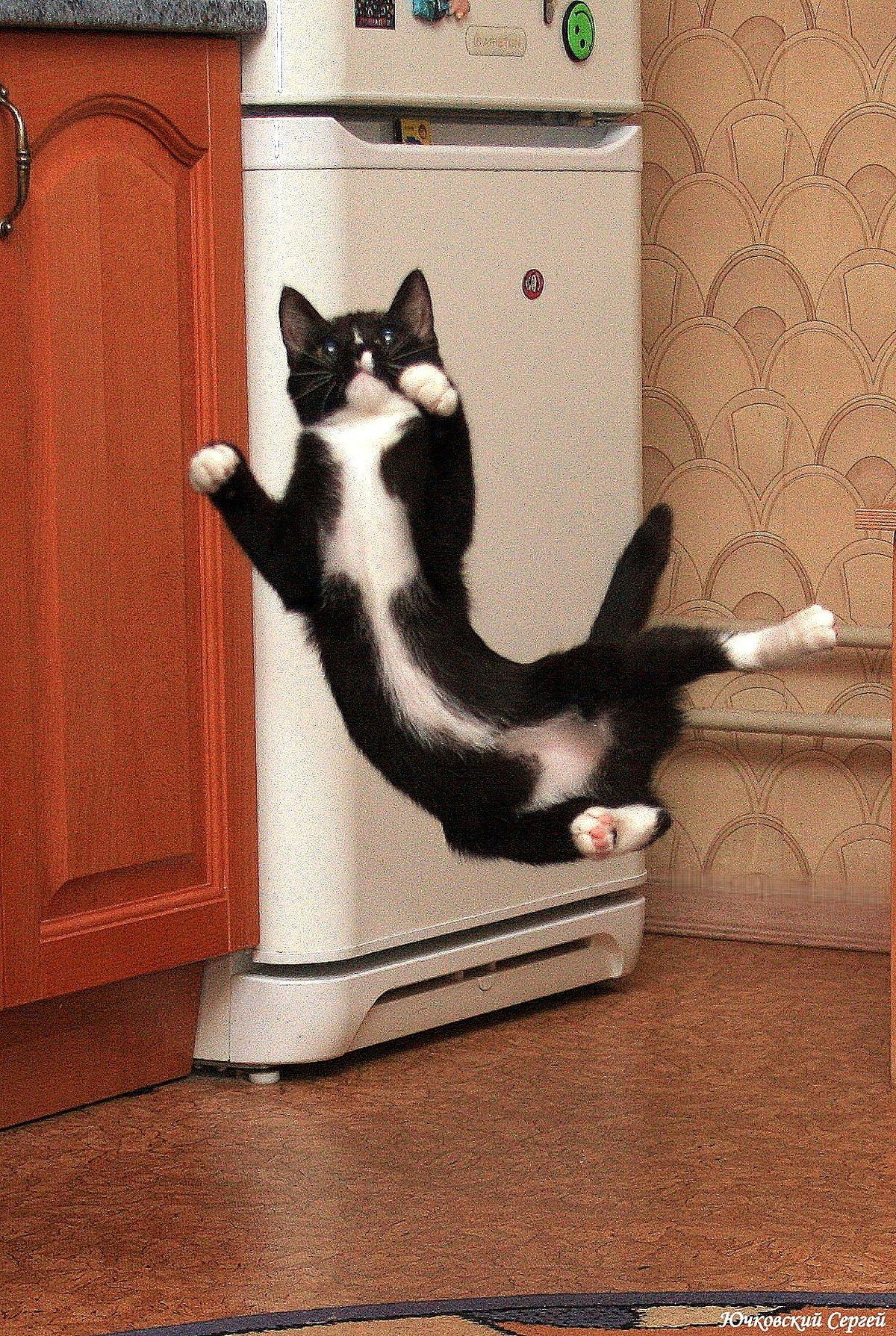 Каратисты мы...#дом #кот #коты #котёнок #кошка #кошки #мурли #полёт #прикол #шутка