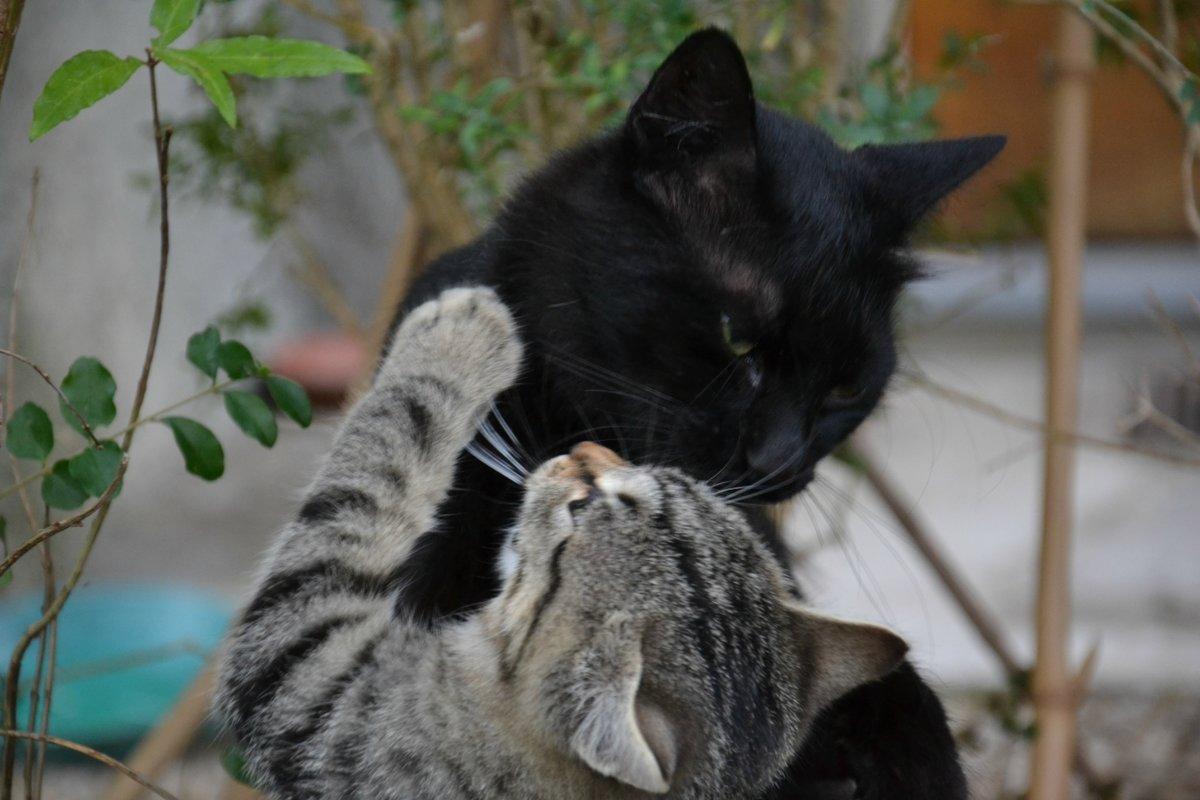 запускать имени картинки любимому с кошкой нужно