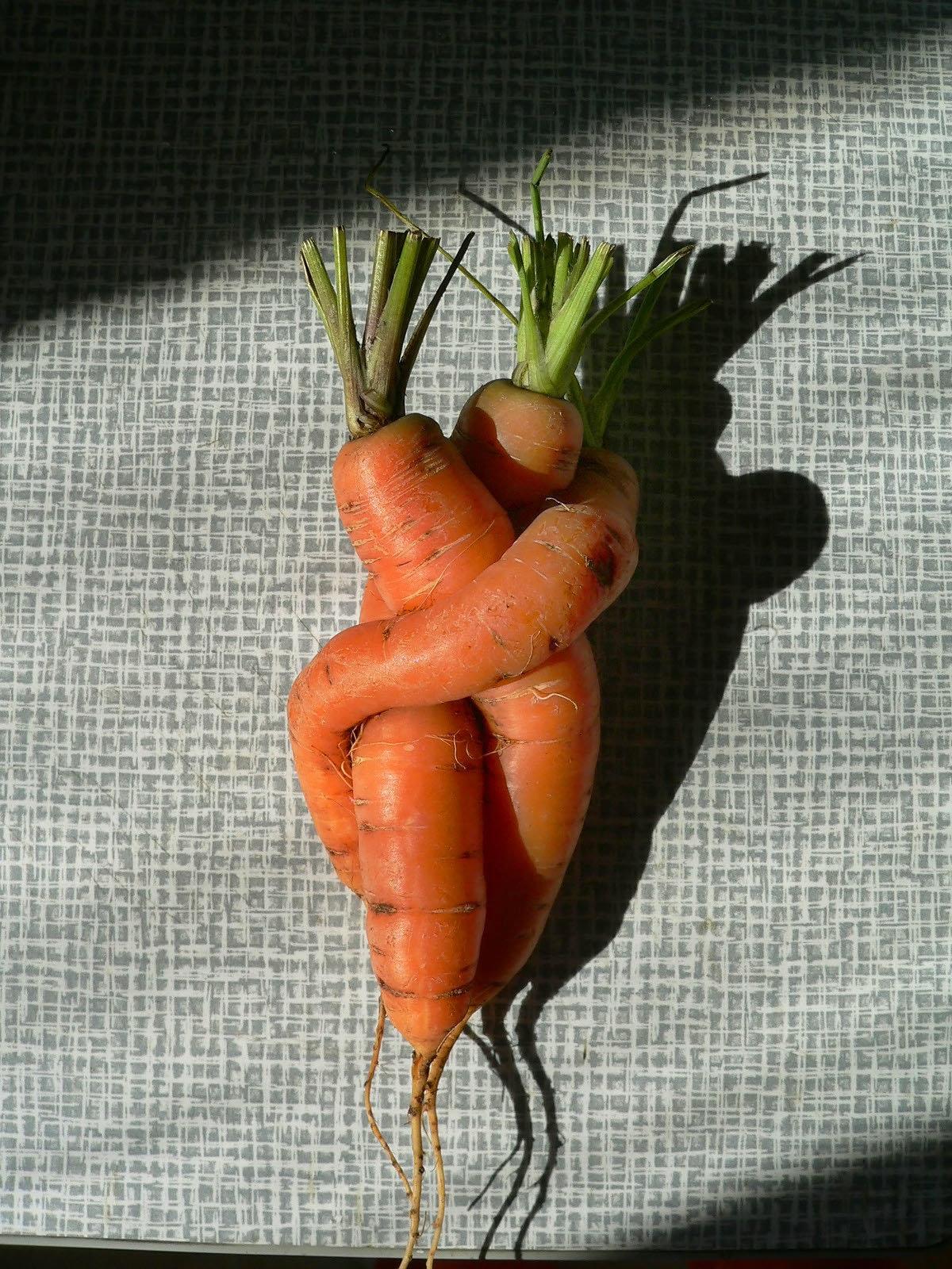 Морковка прикольная картинка, марта лошадью