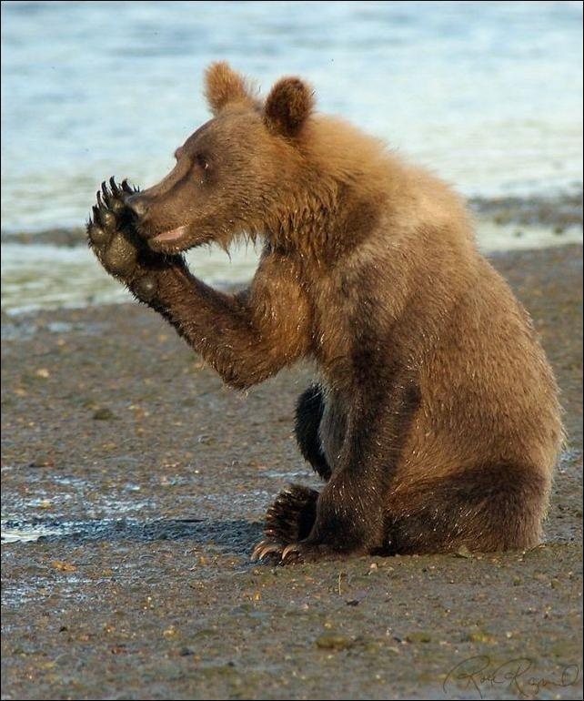 Картинки пианино, смешные картинки о медведях