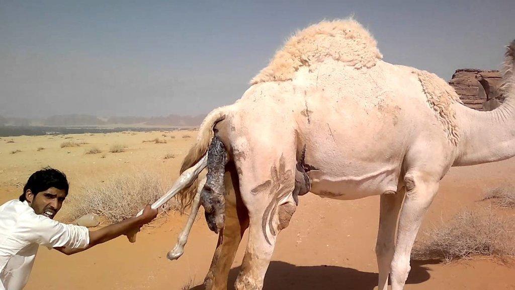 секс рассказы в пустыне