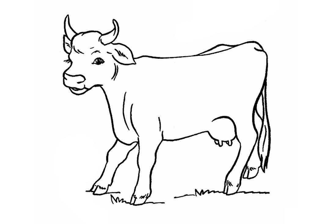 Раскраска корова картинка для детей на прозрачном фоне