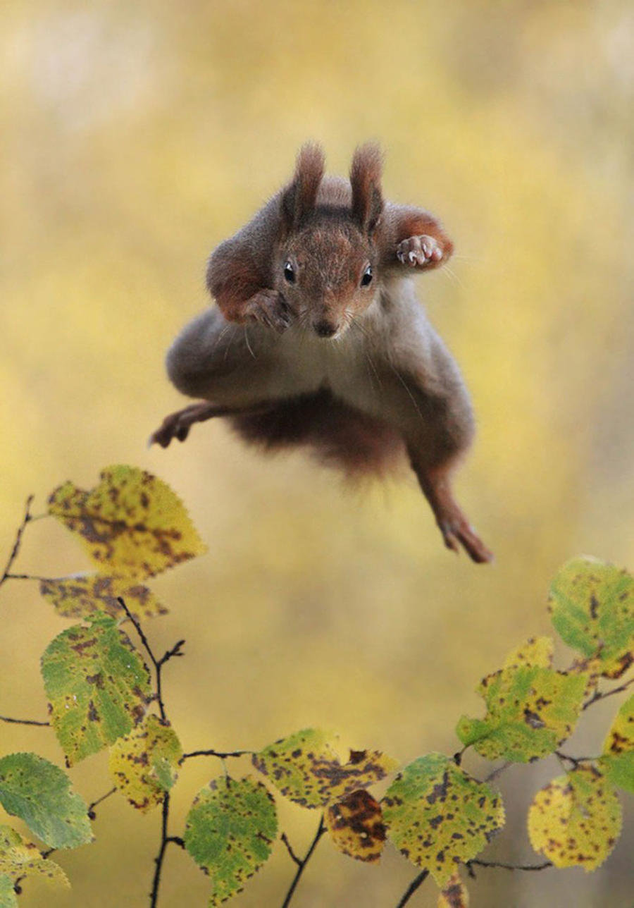 И смешные картинки о животных