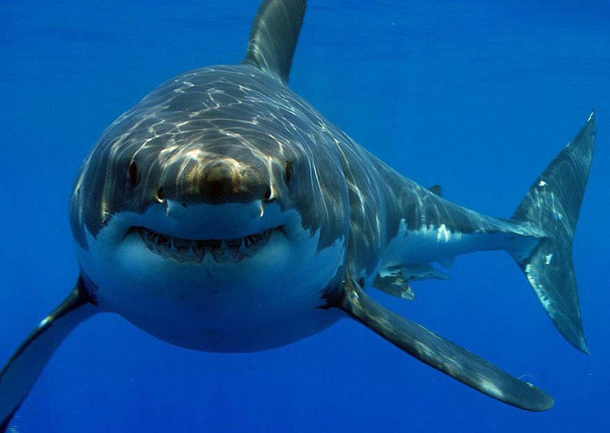 Утро, картинки всех видов акул
