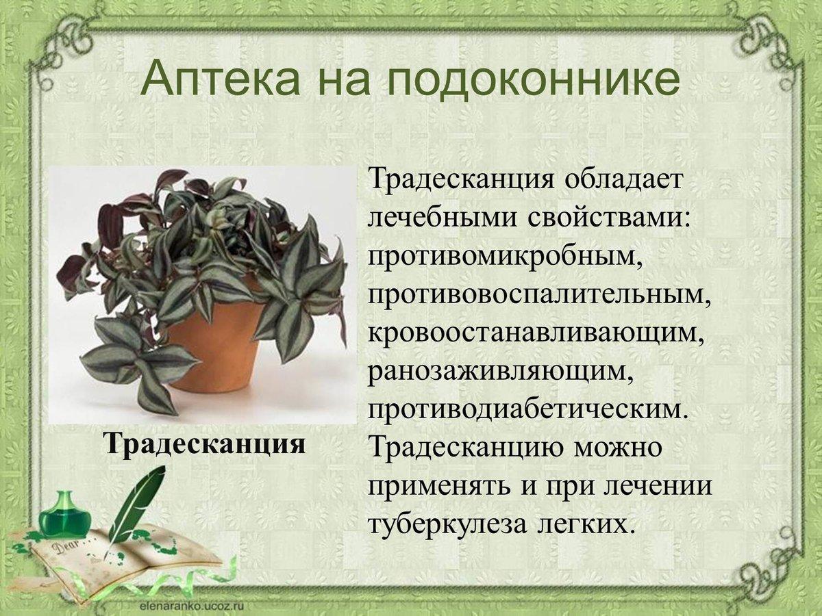 картинки комнатных растений в презентации важно перестараться