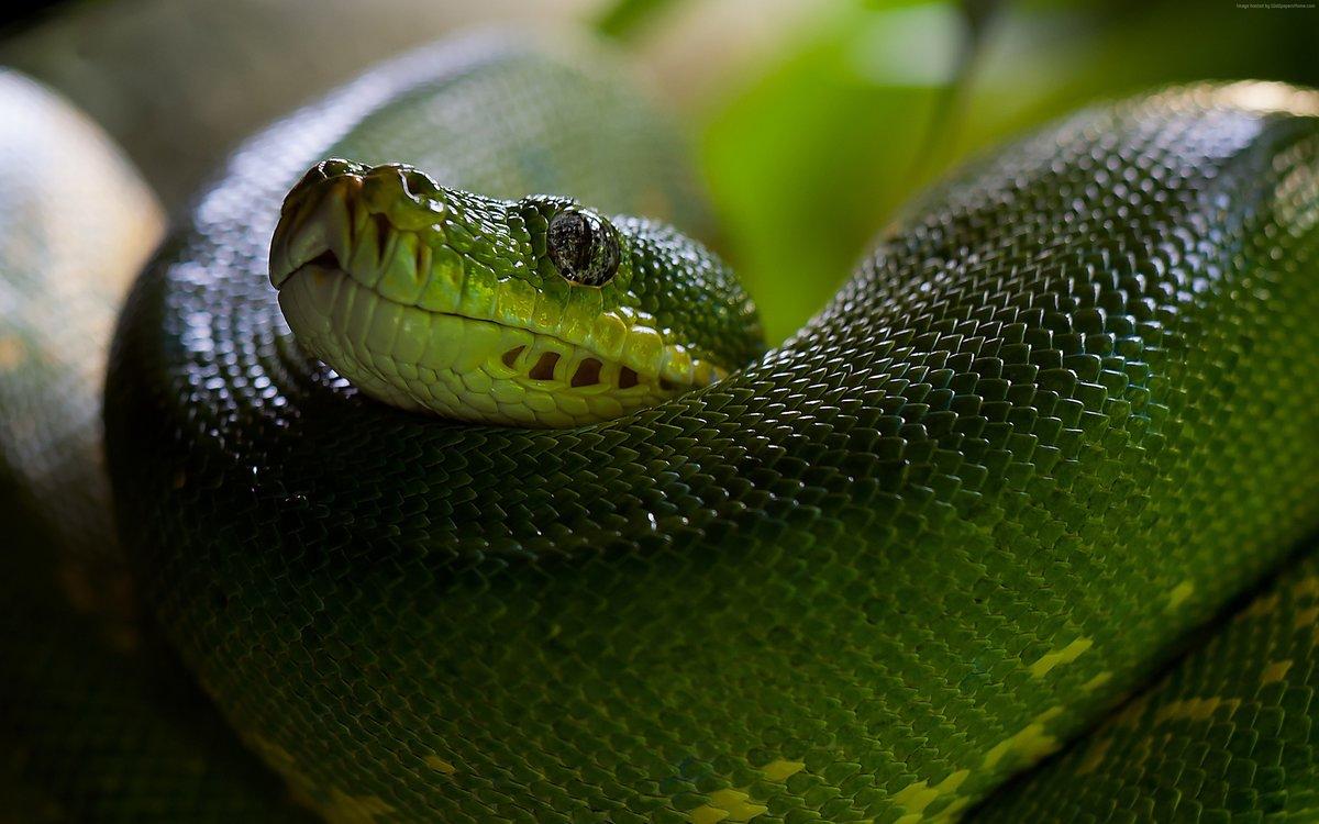 мамба шакьямуни занжуу мкрн. зеленый