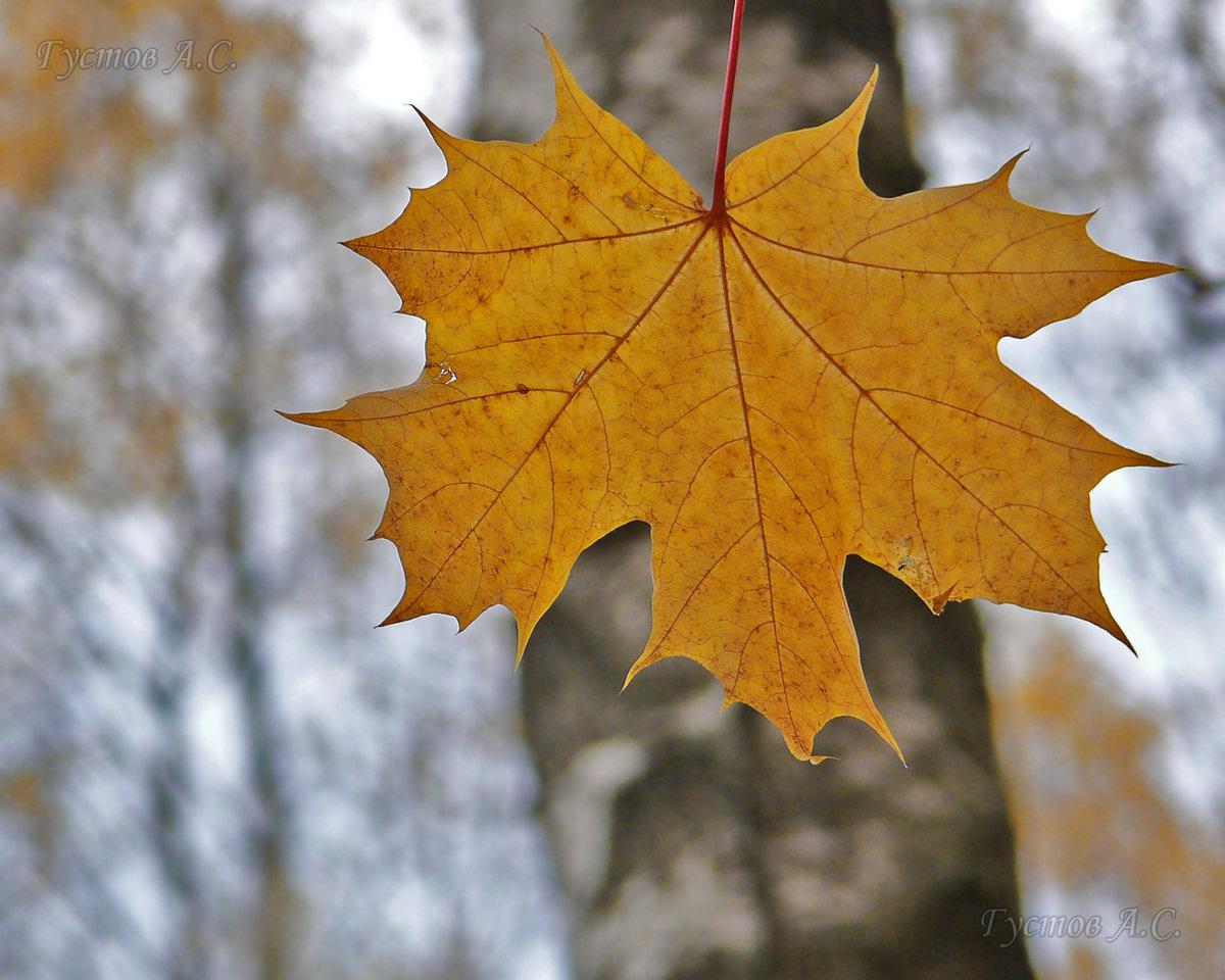 рады смотреть картинки осеннего листа еще один