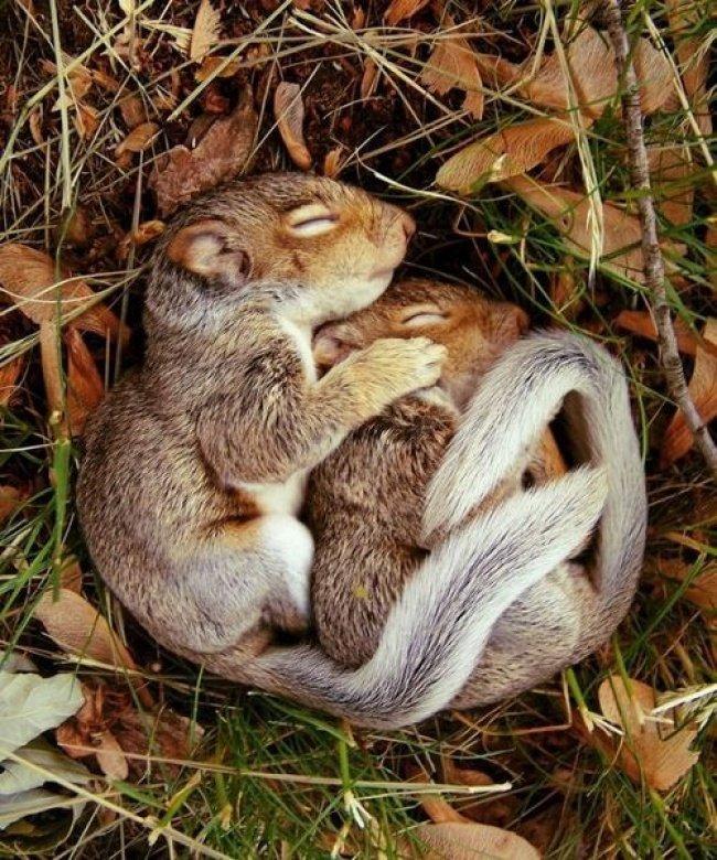Для бывшей, смешные картинки спящие зверюшки