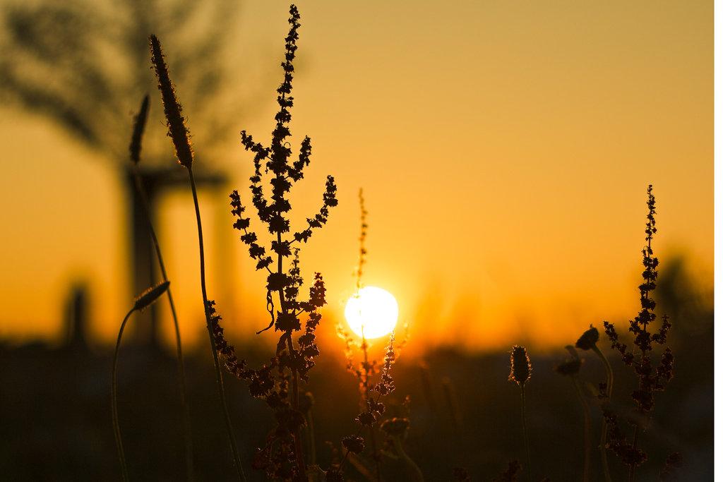 фото на природе в контровом свете связать длинную
