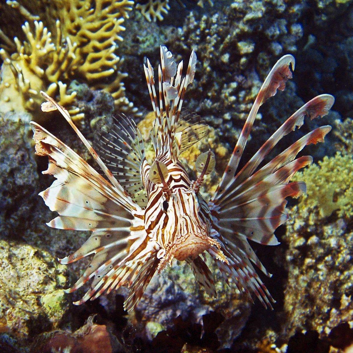 Морские окунеобразные рыбы фото бежит