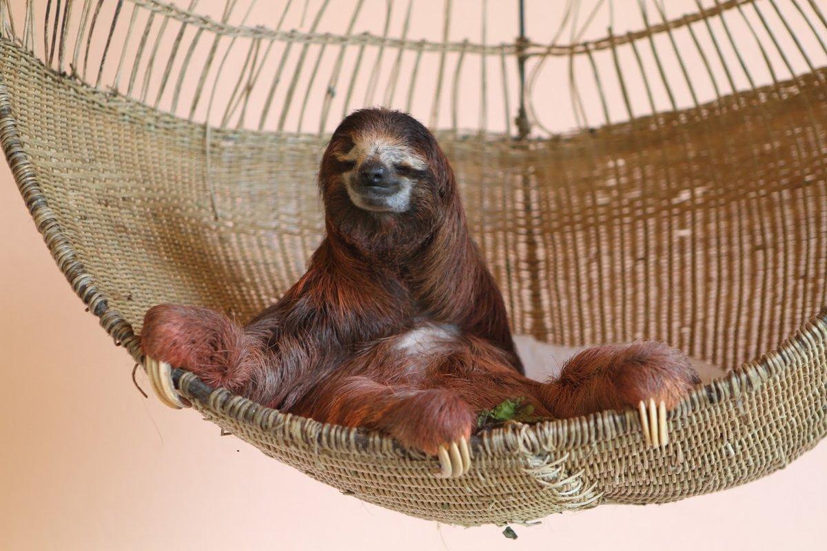смешные ленивцы фото домохозяйка должна знать