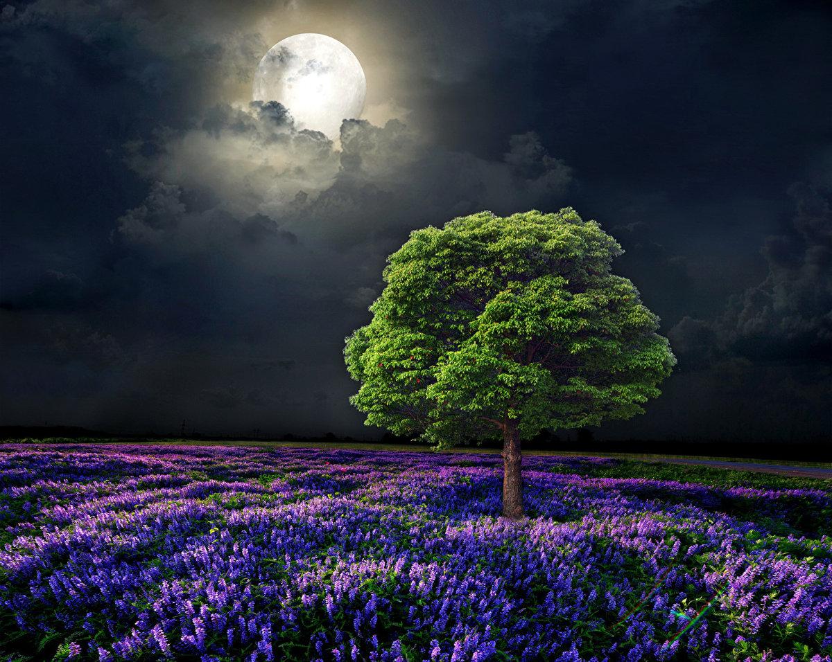 Дерево на цветущем поле ночью.