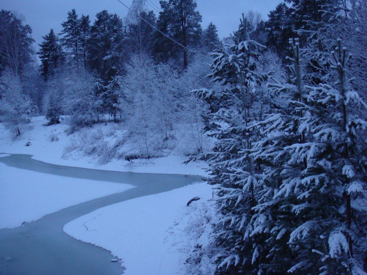зимний вечер лес фото