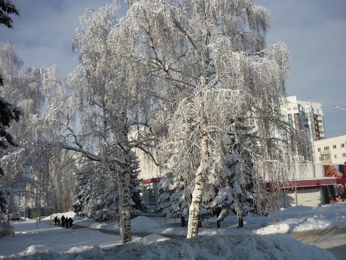 фото зима деревья в городе этого