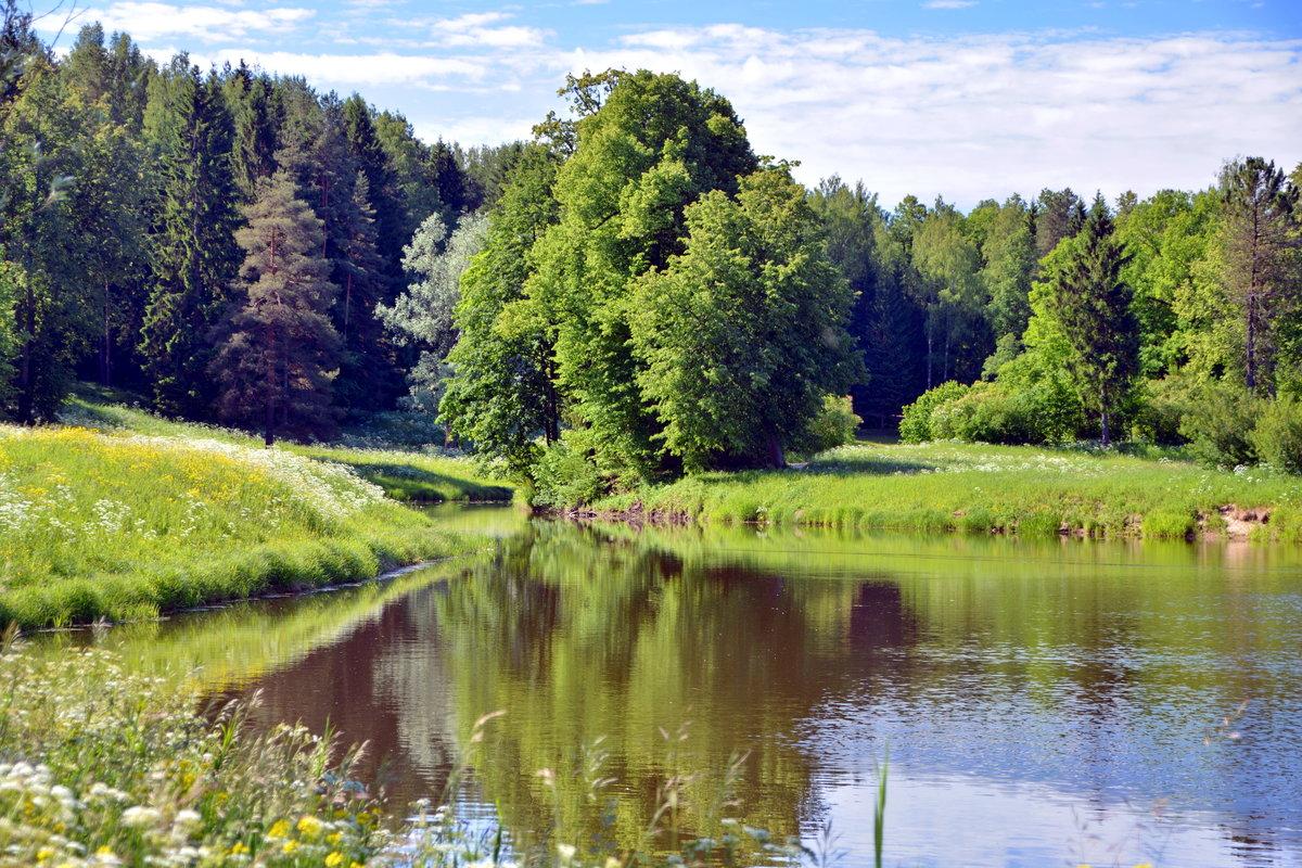 Лето в Павловском парке