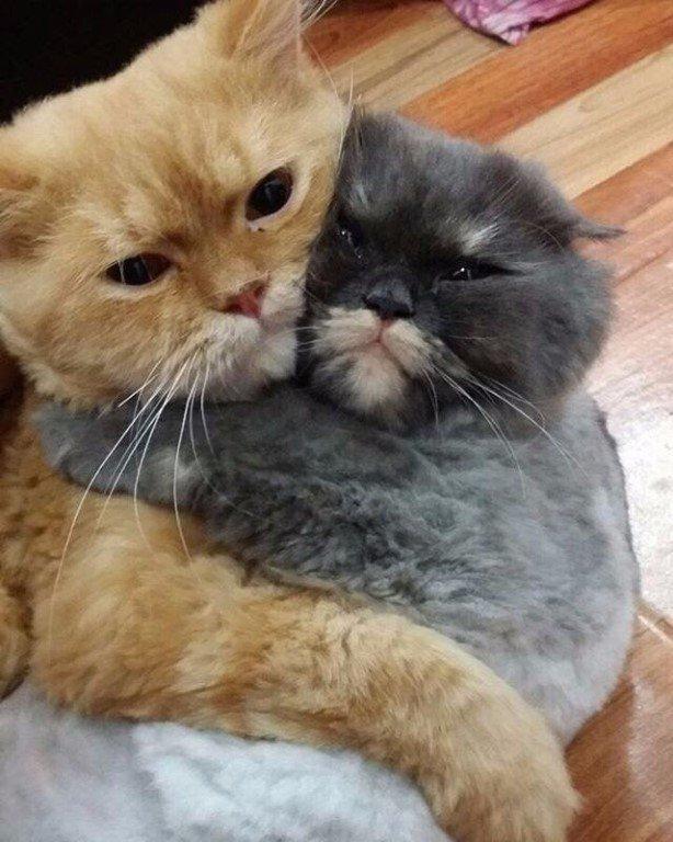 Мой и только мой! Никому тебя не отдам!
