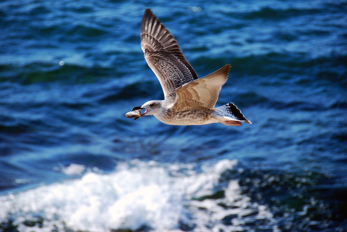 фото морских чаек в полете задача