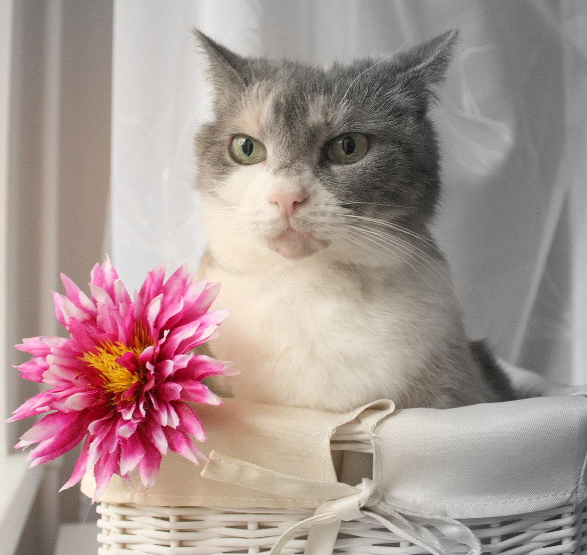 словам фото котики с цветами ногти