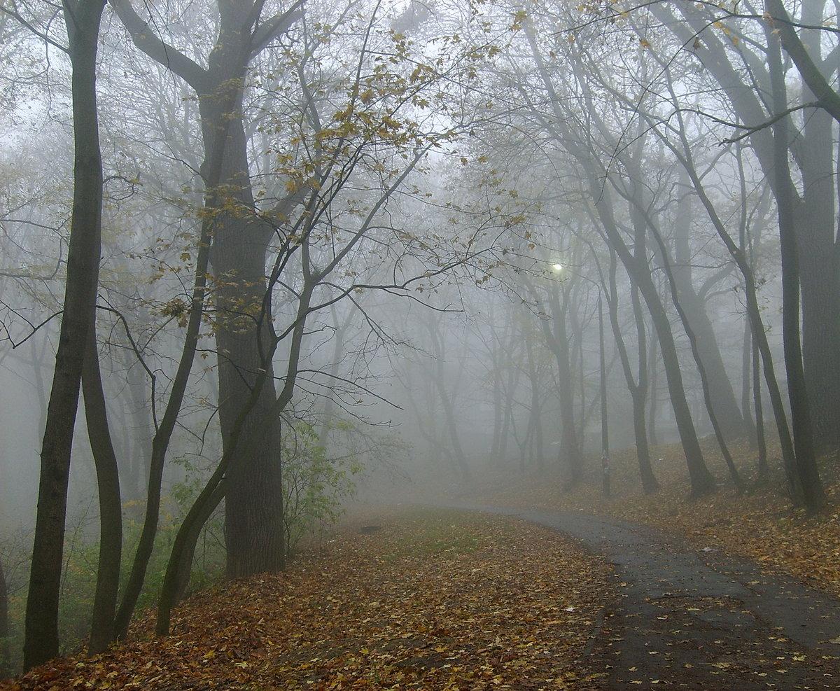 Туманно...#голосеево #день #деревья #киев #осень #природа #туман