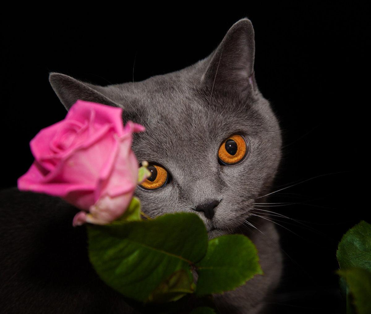 Поздравления с 8 марта в картинках с котами