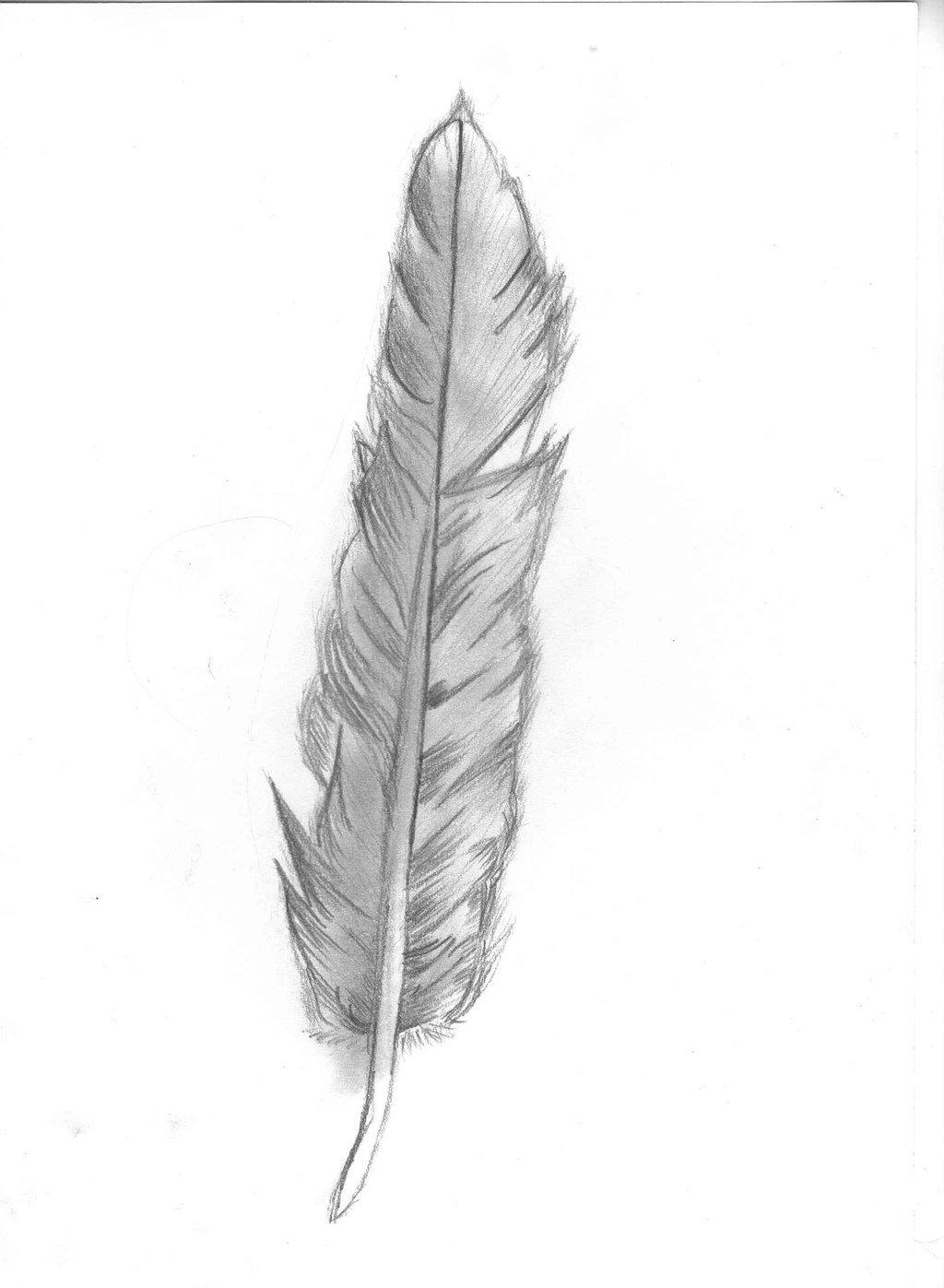 Перо рисунки карандашом