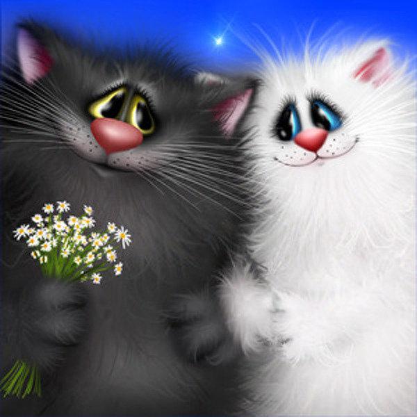 Картинки с котятами прикольные анимации