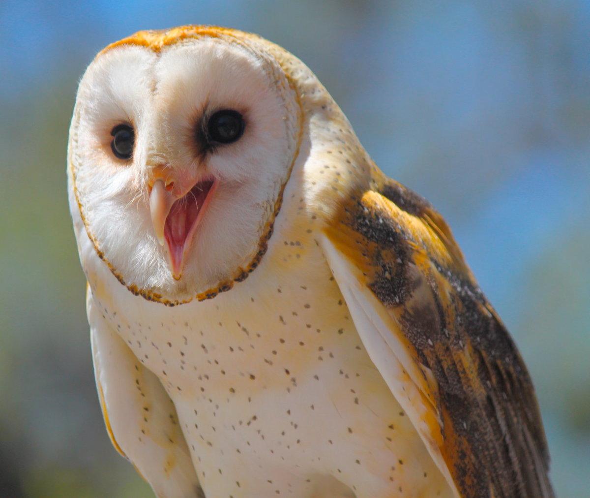 что картинки смеющихся птиц суметь